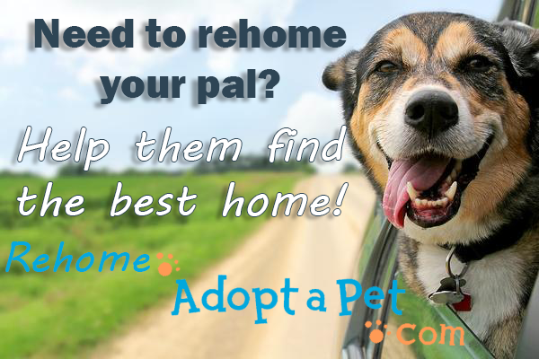rehome_2020post