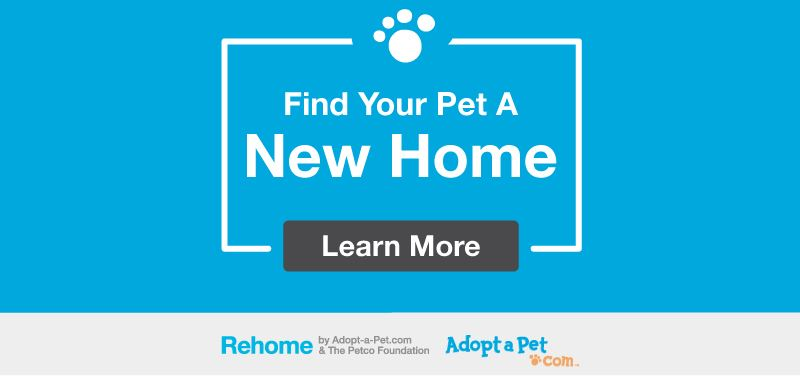 rehomeadoptapet Opens in new window